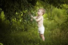 ... (proffkom_) Tags: boy summer vacation june garden children countryside cherries village bokeh eating ukraine grlitz ddr pentacon f28 135mm bukovina meyeroptik orestor