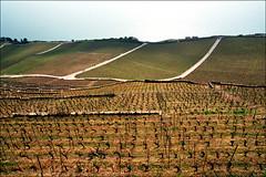 Vineyards near Montreux, Switzerland, early spring 03 (Katarina 2353) Tags: film landscape switzerland vineyard spring nikon swiss montreux katarinastefanovic katarina2353