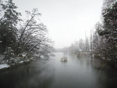 silent snowy day (palmleaf) Tags: park snow tokyo pond coolpix inokashira p300