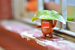 A rainy spring afternoon (WindUpDucks) Tags: rain umbrella leaf spring domo qee toy2r