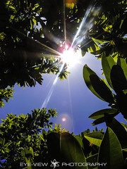 DSCN1854 (Eye-View Photography) Tags: blue sky tree green leaves nikon sunny sharp eyeview