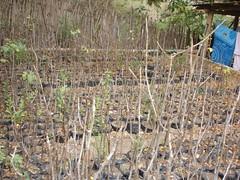 Proyecto de Reforestación de Palo Santo: un plan visionario