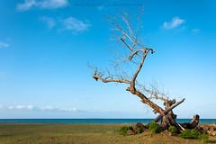 Naturalit . . . (Hafiz_Markzzaki) Tags: trees clouds landscape bluesky malaysia greens nikondigital terengganu beginners bluesea setiu penarik nikond3000 kampungmangkuk nikkorafsdx18105mm hafizmarkkzaki