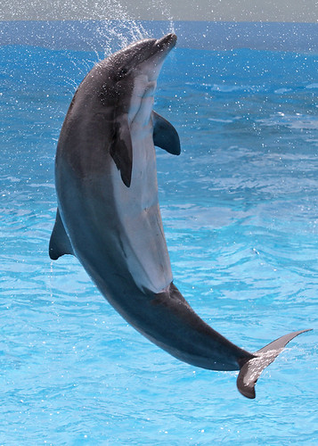 Dolphin Show at Parc Asterix, France