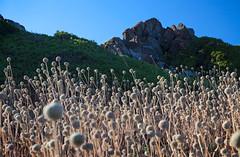 IMG_0921 (Robi Fav) Tags: mare corsica cielo rocce ajaccio francia scogliere scogli isole aglioselvatico isolesanguinarie torredilaparata