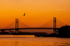 Sunrise YOKOHAMA #maps524 (524select) Tags: bridge sea sky japan port sunrise landscape nikon yokohama d7000