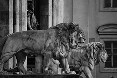 Munchen Lions (W Yenkevich) Tags: germany blacknwhite