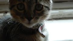 princess (manyi.) Tags: life cats love animal animals cat flickr princess bokeh explore lovely closer miu bokehrama