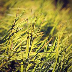 red edges (bratli) Tags: morning autumn light red plants canada colour grass edmonton changing alberta ravine edged blackmud