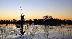 Okavango Delta - Botswana (Christophe Paquignon) Tags: africa travel delta swamp botswana mokoro pirogue okavango
