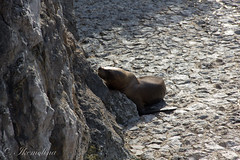 IMG_5219 (Ikemolina) Tags: naturaleza santander 2012 leonesmarinos lamagdalena verano2012