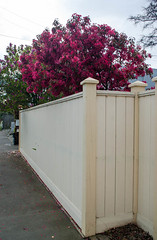 Making a Show (Jocey K) Tags: flowers newzealand christchurch fence buildings blossom footpath