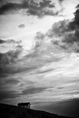 Haus auf der Dne (!Claro) Tags: sky house netherlands clouds evening dune haus dne bergenanzee