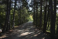 292/365 (hachiko_it) Tags: wood italy tree nature forest canon trail gravel trieste carso carst day292 borst eos450d canoneos450d day292365 santantonioinbosco 3652013 chiarasirotti 365the2013edition 19oct13