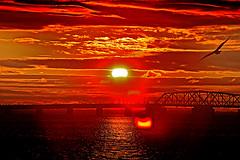 NYC Solar Eclipse IMG_2588 (astroval1) Tags: nyc sun newyork sunrise solar eclipse seagull astrophotography astronomy solareclipse 2013 ramblersville solareclipse2013 seagullsolareclipse solareclipsenovember32013 solareclipsenyc newyorkastronomy newyorkastrophotography nycastronomy nycastrophotography solareclipsenyc2013 nycsolareclipse nycsolareclipse2013 nycsolareclipsenovember32013 nycsunrisesolareclipse