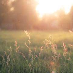Backlight (- David Olsson -) Tags: sunset summer plants sunlight hot macro nature field backlight square landscape intense nikon warm sundown bright sweden bokeh outdoor may meadow warmth karlstad handheld backlit fx tamron 90mm 90 squarecrop sommar d800 vrmland sjstad motljus ng 2013 davidolsson vision:mountain=07 vision:sunset=0851 vision:outdoor=0803 vision:plant=0852 vision:sky=0804 vision:clouds=0751