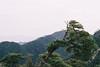 (Kkeina) Tags: trees mountains green film japan analog forest 35mm 50mm olympus hiroshima miyajima manual om om1