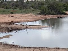 DSC00519 (m_kabza) Tags: southafrica safari timbavati tandatula