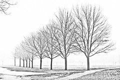 Trees (ash2276) Tags: trees winter bw white black art nature ash227