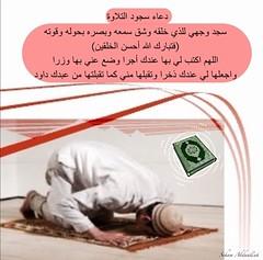 sujood telawat duaa (nooralkalemat) Tags:       islam  religion hadeeth         mohammed     duaa tilawatsujood