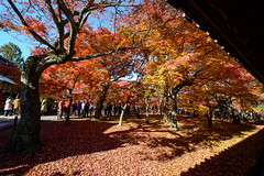"""東福寺 Tofuku ji-Kyoto Japan (J.D Chen ♂) Tags: trip travel autumn vacation japan maple nikon kyoto tour jr 日本 28 jetstar backpacker f28 d800 京都市 京都府 東福寺 kyotoprefecture 1424 ji"""" とうふくじ """"tofuku"""