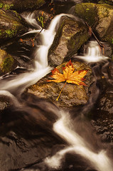Autumn Waterfall and Leaf (RobbART878) Tags: longexposure autumn light canada fall nature water leaves rain composition forest landscape waterfall leaf warm soft bc outdoor creative naturallight le pacificnorthwest polarize canadianartist nikond5100