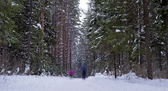 winter mood #6 (Sergey S Ponomarev) Tags: trees winter light snow ski nature pine forest canon landscape frost skiing russia outdoor ngc pines fir 600d vyatka 24105l sergeyponomarev viatka