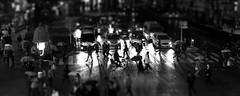 Umbrella walk in 1:144 scale (nikkorglass) Tags: bw rain japan tokyo miniature crossing shibuya nippon ts sv tiltshift 2013