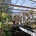 Suter Science Center greenhouse before the 2014-2016 renovation began.