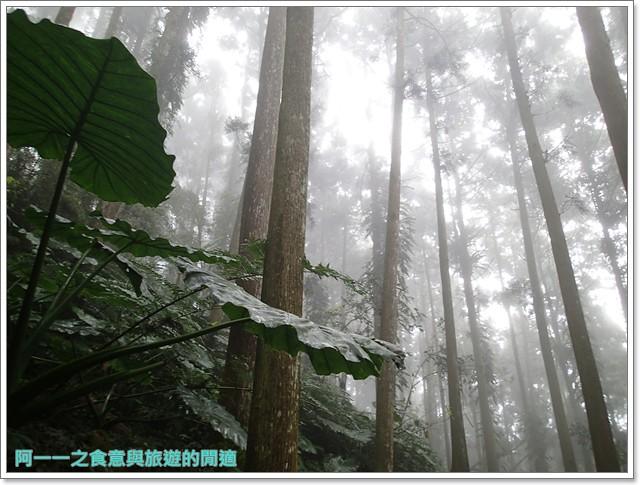 南投溪頭自然教育園區台大image017
