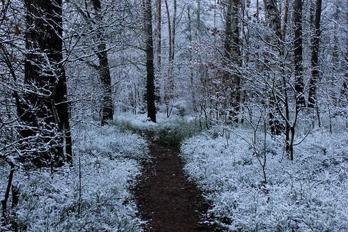 "Im Winterwald mit Schnee 2015 • <a style=""font-size:0.8em;"" href=""http://www.flickr.com/photos/69570948@N04/16217726089/"" target=""_blank"">View on Flickr</a>"