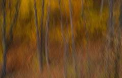 edwinloyolaNewYorkPortfolioReviewFall02 (Edwin Loyola) Tags: autumn winter summer abstract fall nature seasons fineart fourseasons icm esl intentionalcameramovement edwinsloyola edwinloyola edwinloyolaphotography eslphotography