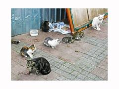 cats-ologbo--mo- (ben ot) Tags: cats chats  ologbo mo