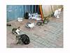 cats-ologbo-קאַץ-mèo-بلیوں (ben oït) Tags: cats chats קאַץ ologbo mèoبلیو
