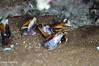 Caracoles. (Mery Legarreta) Tags: argentina snail caracoles claromeco caramujos