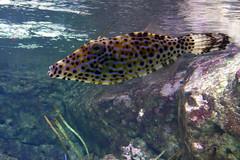 Aquarium de Paris  (19) (Mhln) Tags: paris aquarium requin poisson trocadero poissons meduse 2015 cineaqua