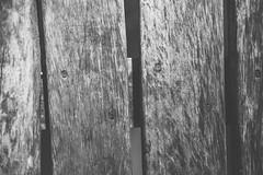 La Selva Misionera (luccalazza) Tags: trip viaje naturaleza nature argentina portraits 35mm nikon selva 85mm naturallight jungle misiones obera d610 primelens 18g