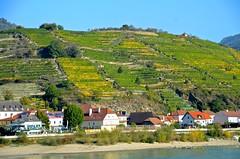 Wachau Village (Woody H1) Tags: cruise green river landscape austria vineyard europe village medieval hills grapes viking danube winecountry wachau