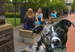 That Look In Your Eyes (swong95765) Tags: city people dog cute animal emotion expression sidewalk curious doggie attentive