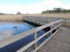 DSCN1943 (bruce.smith85) Tags: water boardwalk saltholme