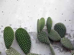 I've been to Madrid (indrarado) Tags: madrid park travel cactus pet plant flower tree nature animal cat garden naked nude spain couple tourist frog pot journey botanic pail