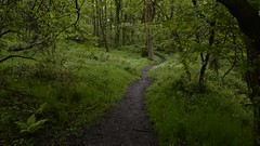 Time lapse walk in the woods (Keartona) Tags: woods woodland timelapse green summer rainy day trees path movement video england charlesworth walk