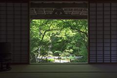 Hky-in  (PV9007 Photography) Tags: trees summer green japan garden temple maple kyoto sommer arashiyama  grn   kansai garten sagano tempel    ahorn  shinryoku     aomomiji hkyin