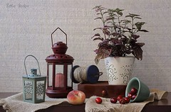 Arrangement With My Plant (Esther Spektor - Thanks for 11+ millions views..) Tags: pink blue red stilllife food brown white plant green texture metal fruit composition canon cherry handle wooden ceramics pattern candle availablelight burgundy peach stilleben bowl rope pot drawer lantern bobbin runner arrangement tabletop burlap bodegon naturemorte naturamorta naturezamorta creativephotography artisticphoto estherspektor