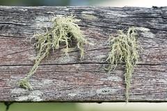 Finally got it! (daniel_james) Tags: wood macro rural fence moss timber farm australia nsw weathered bentley northcoast 2016 northernrivers tamron60mmmacro