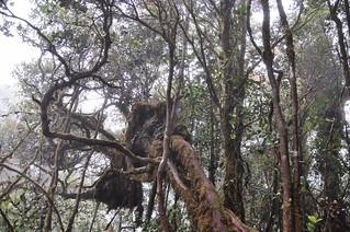 cameron highlands- malaisie 17