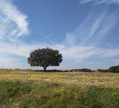 Primavera #spain #espaa # (adolfo40mc) Tags: espaa spain