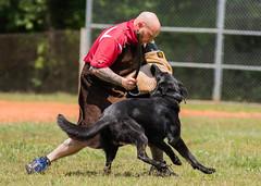 2016-05-22, IPO Training-36 (Falon167) Tags: dog shepherd josh german miles gsd germanshepherddog
