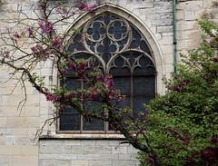 Dco de printemps (Et si, et si ...) Tags: fleurs bourges pierre cathdrale printemps vitraux