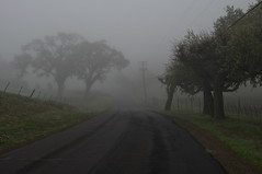 Strange Journey (blueteeth) Tags: countryroad trees fog powerlines mystery deserted quiet eerie